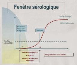 Graphique expliquant la fenêtre sérologique