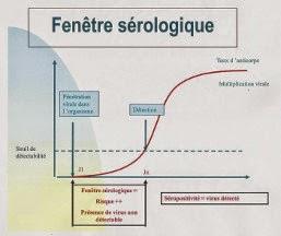 graphique représentant la fenêtre sérologique du risque de transmission des virus