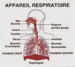 Schéma de l'appareil respiratoire (bouche, nez, trachée, poumons)